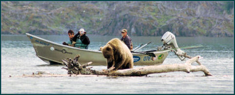 Alaska Kenai River Brown Bears Love Salmon